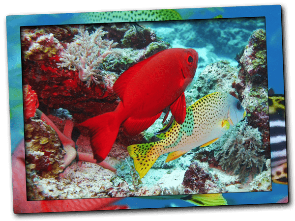 Reef fish | Dive site Kichafi at Nungwi reef in Zanzibar