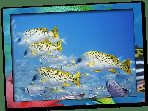 Discover Scuba Diving in Zanzibar