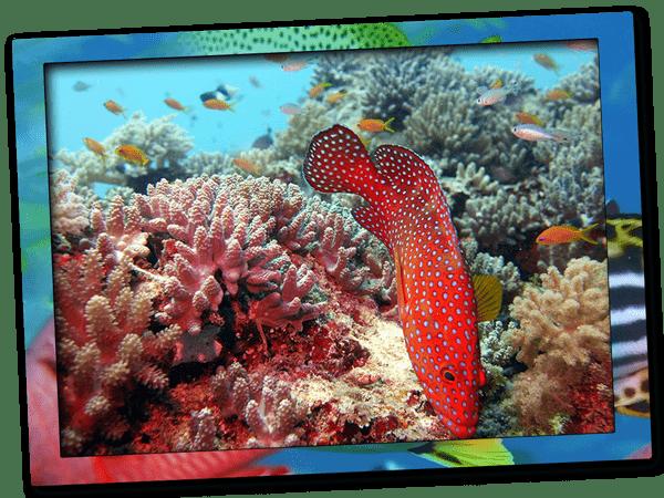 Try PADI Discover Scuba Diving in Zanzibar
