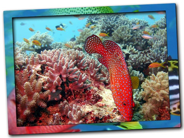 Diving on the coral reefs in Zanzibar North